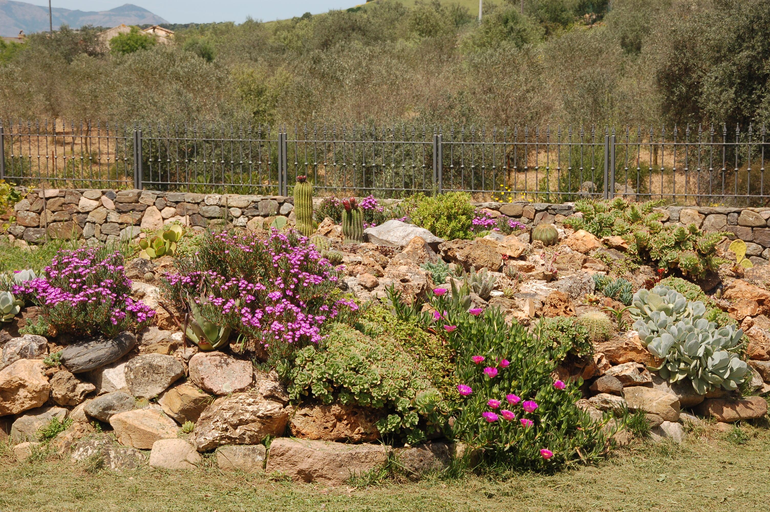 Giardino roccioso piante grasse